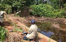 restoring Wongaling Creek