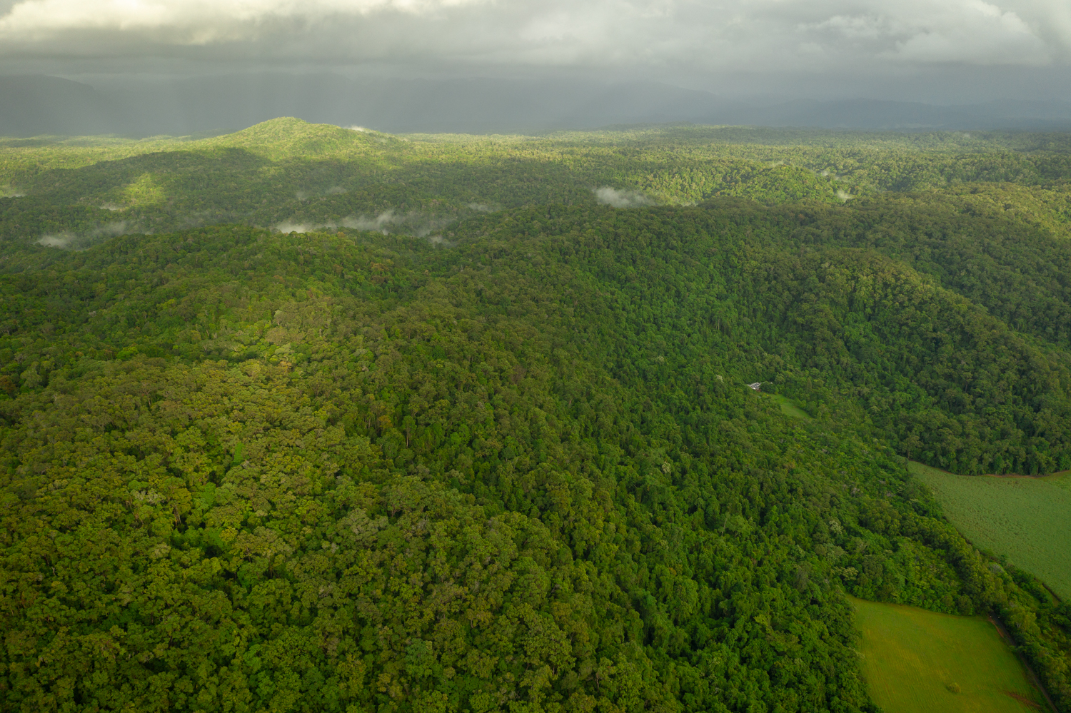 Rainforest Rescue - News - Planting Trees to Address Climate