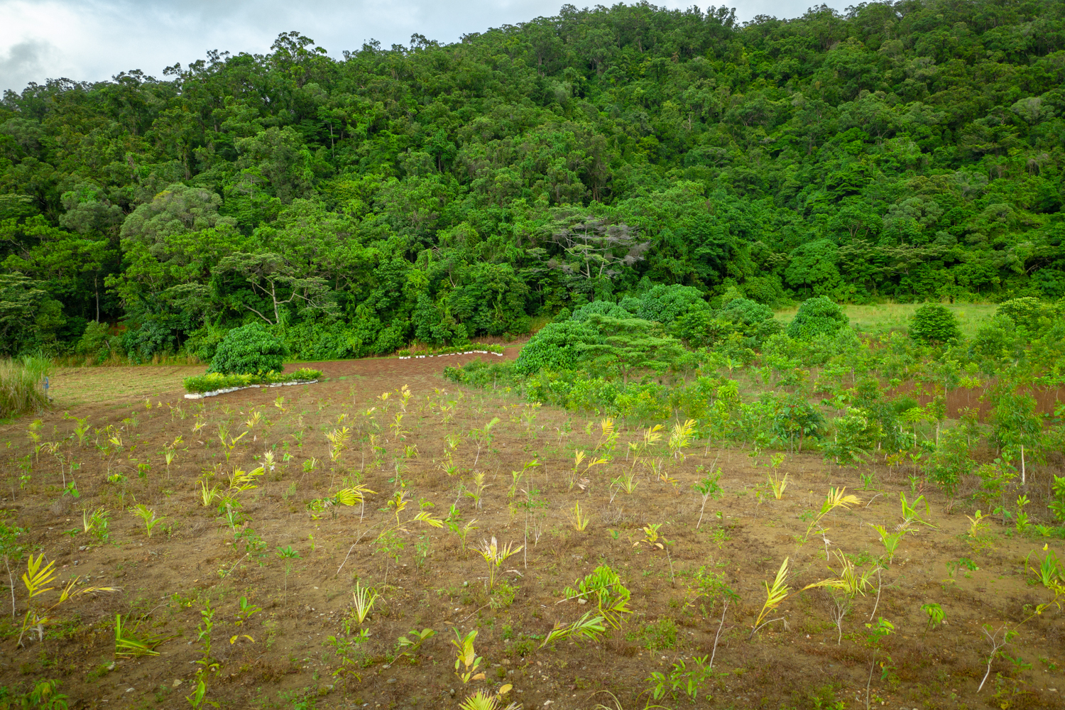 20190504-Rainforest_Rescue_Tree_Planting_Image-Martin_Stringer_0185