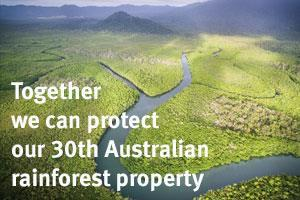 how to help the rainforest from home