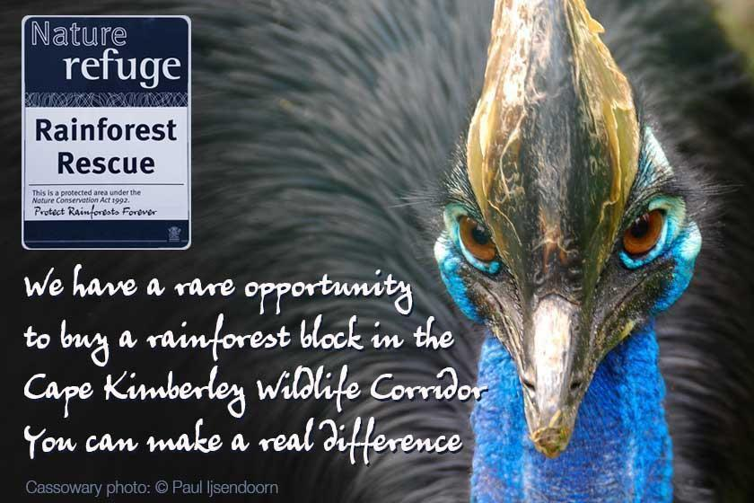 Together we have a rare opportunity to rescue a rainforest block