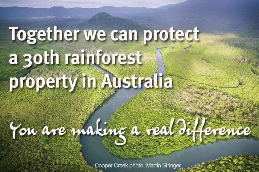 Help protect a 30th Australian rainforest property